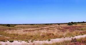 Natuurgebied omgeving Weert
